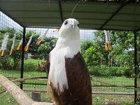 IMG_6822 eagle.JPG