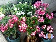 Attractive flowers.jpg